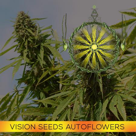 Vision AutoFem