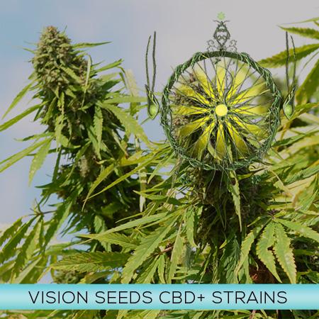 Vision CBD+