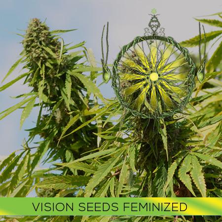 Vision Feminized