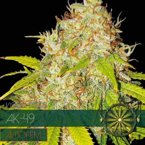 AK-49 – AutoFem - Vision Seeds