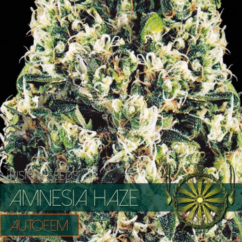 Amnesia Haze – AutoFem - Vision Seeds