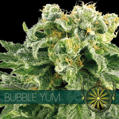 Bubble Yum - Vision Seeds