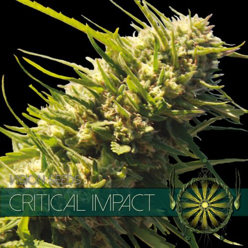 Critical Impact - Vision Seeds