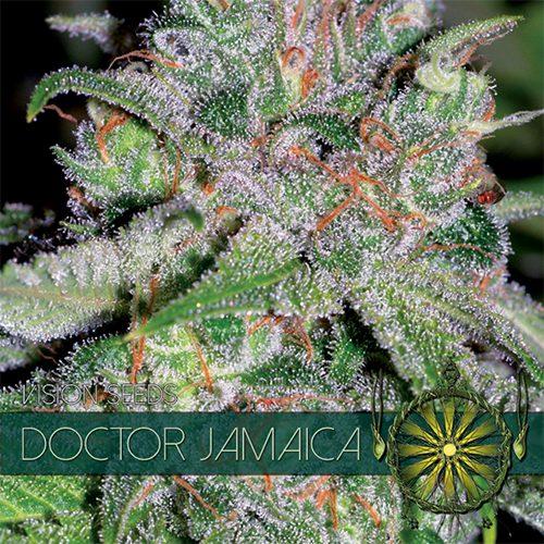 Doctor Jamaica - Vision Seeds