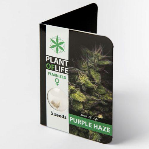 PURPLE HAZE (Plant of Life)